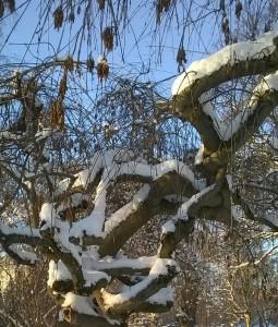 Vinterforknytt
