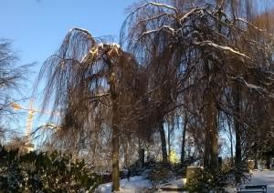 Vintertrollene