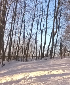 Vintertynne trær